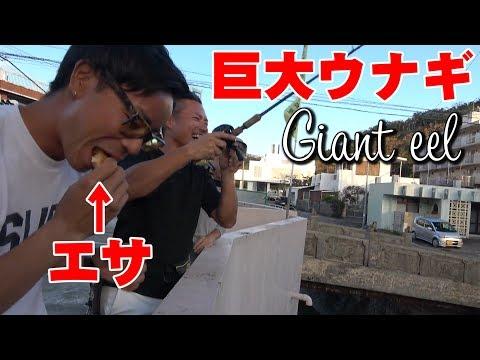 爆笑!?大ウナギ釣り。【釣りジャックコラボ】【沖縄】【TJ】
