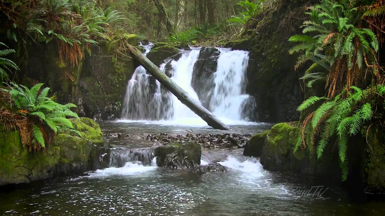the forest waterfall hd the calming sound of water youtube