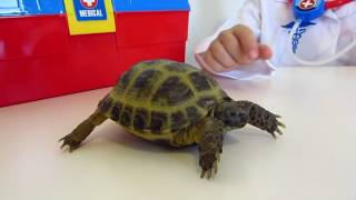 Черепаха Даша на приеме у доктора#Лечим черепаху#Играем в доктора