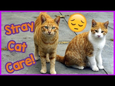 How to Care for A Stray Cat - Missing Cat Care tips!