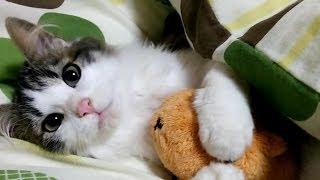 「寝てるの? 起きてよー!」寝たい猫と遊びたい子猫が可愛い