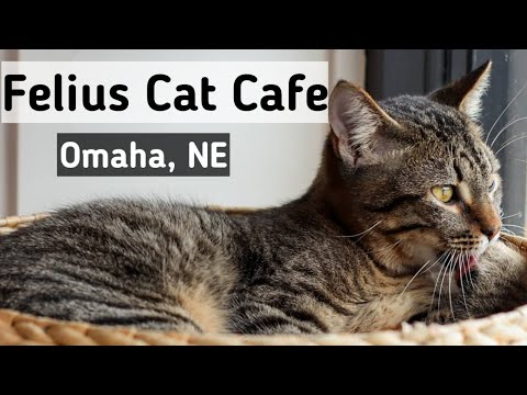 FELIUS CAT CAFE - Omaha, Nebraska
