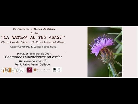 Centaurees valencianes: un esclat de biodiversitat.