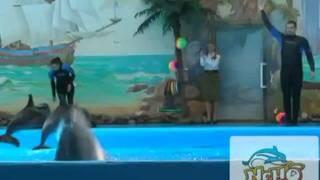 Афиша дневное шоу в дельфинарии