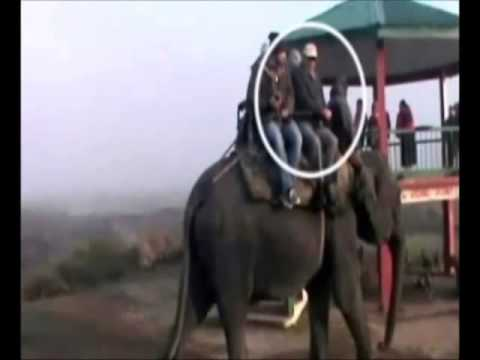 As Assam Burned With Violence, States Top Bureaucrat Enjoyed Elephant Rides