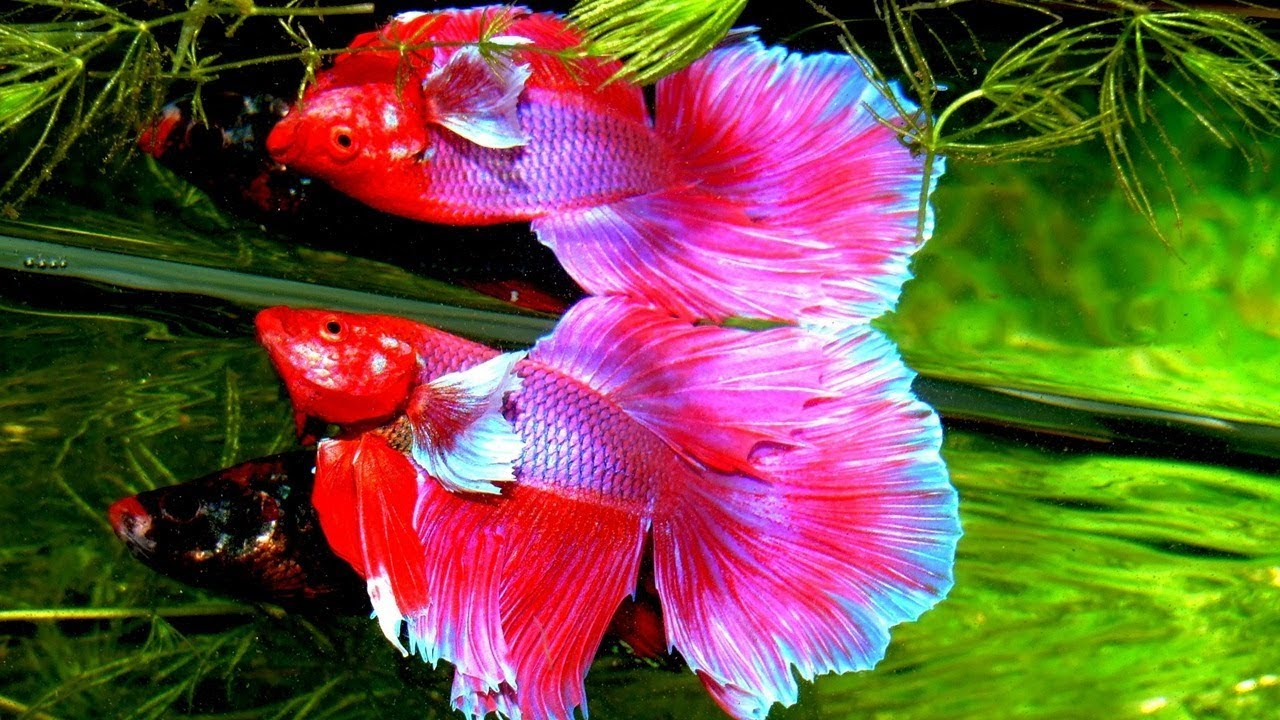 The most beautiful fish in the world: list, description and reviews 13