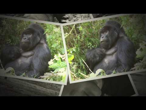 Gorillas and Game Parks 2017