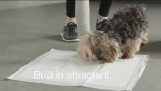 Amazon Basics: Puppy Training Pads - 150 pack