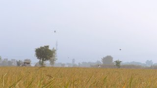 Long shot of an Indian farmer roaming in his agricultural field in Delhi/NCR, India