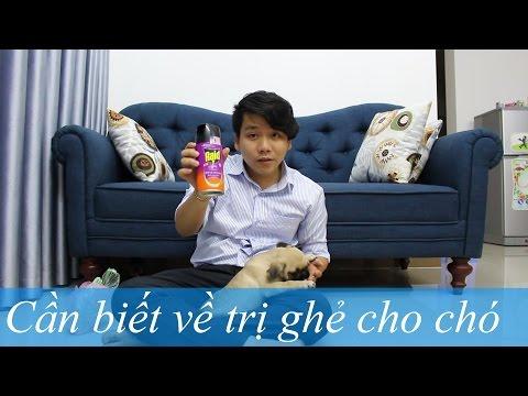 Pugk vlog 7: Mẹo trị ghẻ cho chó siêu tốc, người nuôi chó cần biết