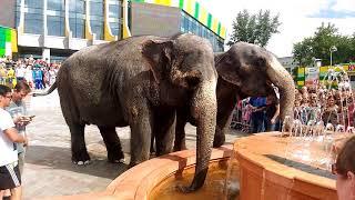 Слоны на улице Омска