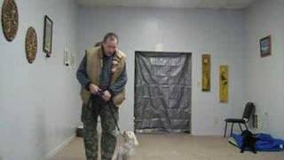 #3 Dog Training - Small Breed Fear Biter Doing Great - Video 3