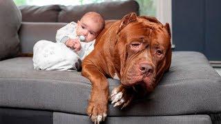 ТОП-10 КРУПНЫХ собак для КВАРТИРЫ