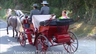 Défilé espagnol - Les attelages BLANC