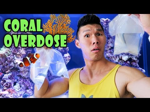 RARE CORAL HAUL | Saltwater Reef Aquarium - Life After College: Ep. 469