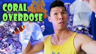 RARE CORAL HAUL | Saltwater Reef Aquarium - Life After College: Ep. 469 thumbnail