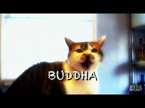 Buddha's Follow-Up | My Cat From Hell
