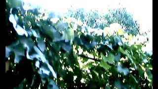 Укрытие винограда на зиму._xvid.avi(Снимал видео на своем винограднике., 2011-11-17T11:40:35.000Z)