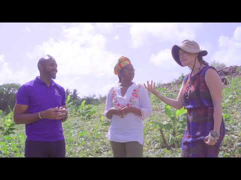 Bush Tea: Herbs, Plants and Barbadian Botanical Stories Ep.3