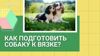 Подготовка собаки к вязке
