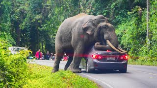 Top Angry Elephants Attack Everything Moments