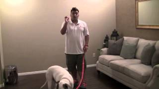 "How To Train Your ""dog"" For Movies & Tv (how To Train Your ""dog"" To Sit Using Sign Language)"