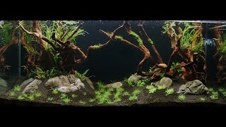 Setup of an 300l amazon freshwater tank