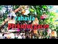 Rahasia Bikin Mental Perkutut Lokal Juara Di Gantang An Dan Terasan Tetep Gacor Bukti Keampu Han  Mp3 - Mp4 Download