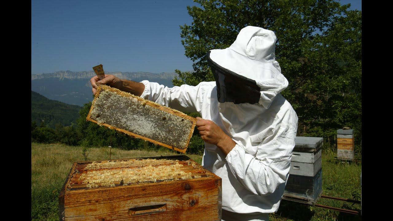 fiche m u00e9tier apiculteur