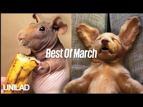 Best Of... March Compilation | UNILAD
