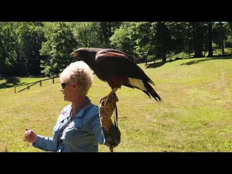 Falconry at The Omni Homestead