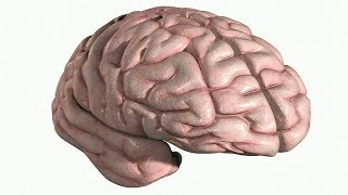 brain and cranial nerves-4 . structures of cerebrum the gyri and sulci.