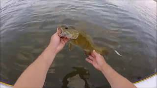BIG Live-Bait Fishing on the River!