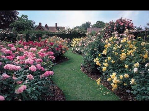 C mo cultivar rosales en tu jard n youtube - Plantas de jardin fotos ...