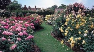 ¿Cómo cultivar rosales en tu jardín?