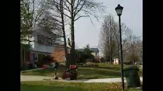 Arbortech Louisville Ky Tree coming down