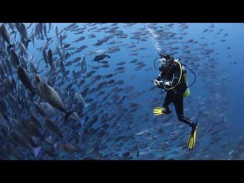 Papua Diving Resorts - Kri Eco & Sorido Bay - Raja Ampat -Indonesia