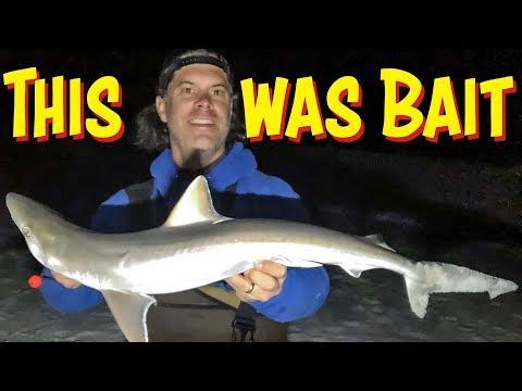 Using A Shark To Catch A Shark - Destin Surf Fishing
