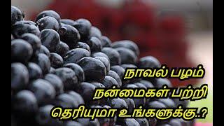Benefits & Uses of Jamun Fruit in Tamil | Naaval Pazham | Diabetes | Healthy Life - Tamil.