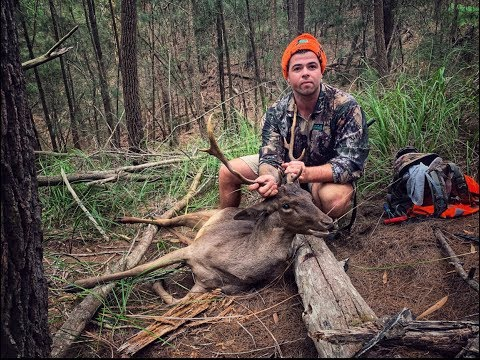 Deer Everywhere !! NSW State Forest Deer Hunt + Dive