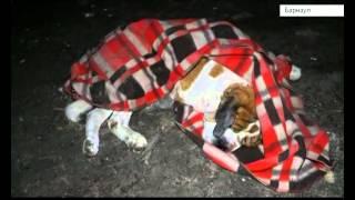 Кладбище домашних животных: сюжет К24©