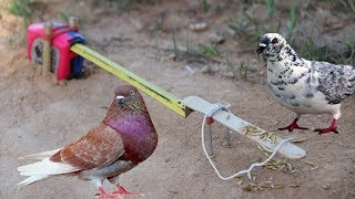 Awesome Very easy Simple Bird Trap Make from Meter and a Popsicle Stick