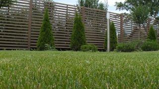 Как ухаживать за газоном(Как правильно постригать высаженный газон? Какую газонокосилку использовать? Что влияет на скорейшее восс..., 2016-08-08T15:00:39.000Z)