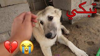 كلبة ضربوها اطفال 😢 شوفوا ردة فعلها لما انقذتها منهم !!
