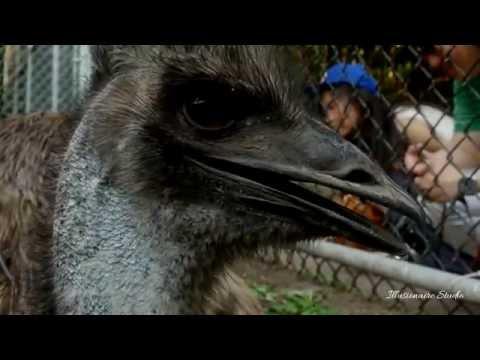 Toronto High Park Zoo