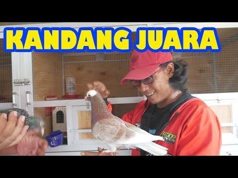 GREBEK KANDANG NSK Team Palembang Sumatra Selatan