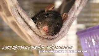 🐭МОИ КРЫСЫ || УХОД И СОДЕРЖАНИЕ ДЕКОРАТИВНЫХ КРЫС🐀 || Что должно быть в клетке у крыс?🌾