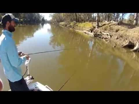 Murray Cod Fishing 3-5-15