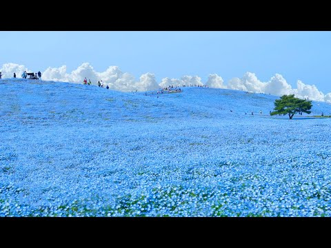 Most Surreal National Park ★ ONLY in JAPAN #53