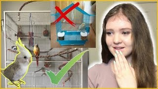 Reacting to My Subscribers' Bird Cages!